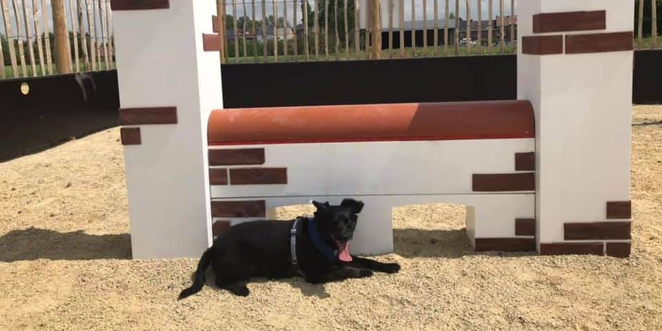 Une plaine de jeu pour chiens à Ecaussinnes