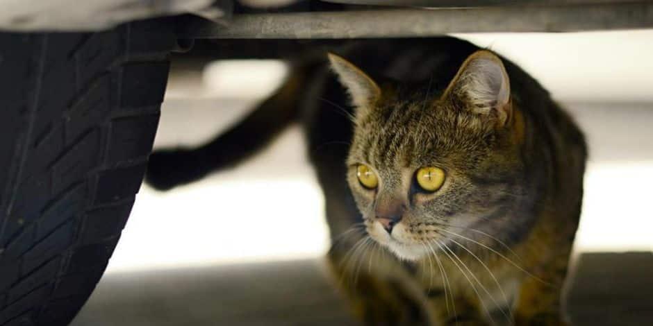 Vol à la ruse dans le Borinage: le voleur utilise l'excuse du chat pour agir