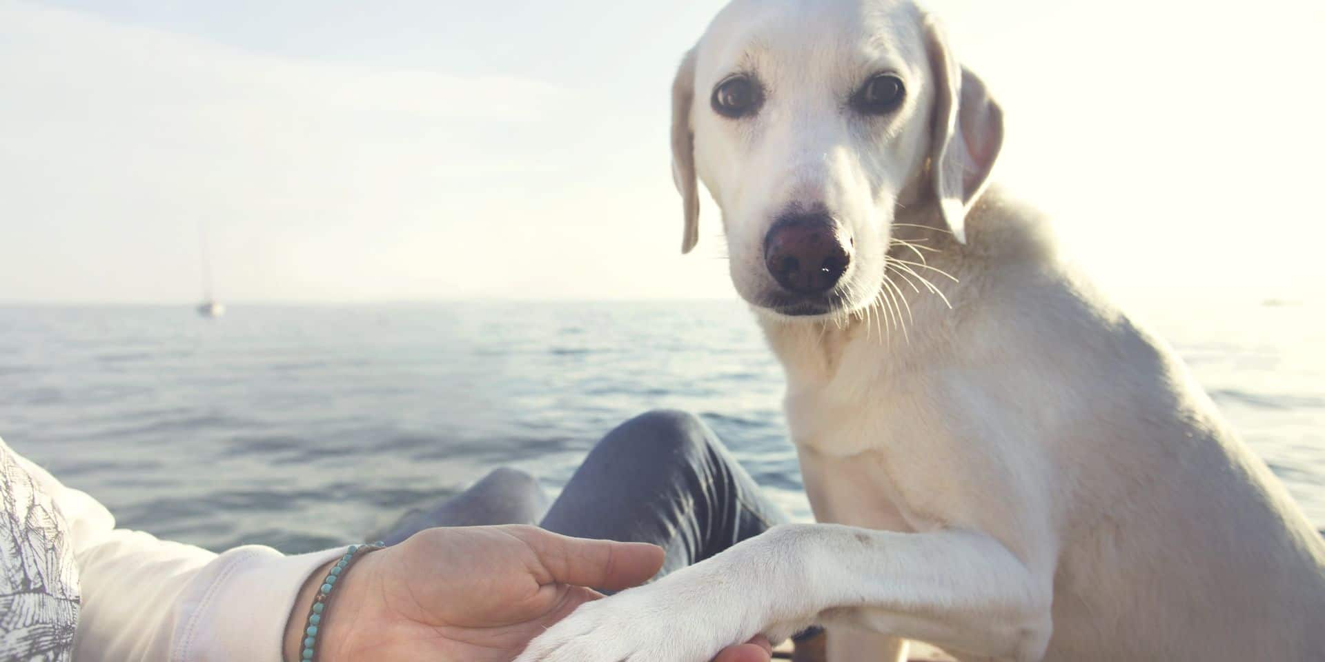 Un homme dans le plâtre dépense 400 euros chez le vétérinaire, son chien boîtait pour l'imiter