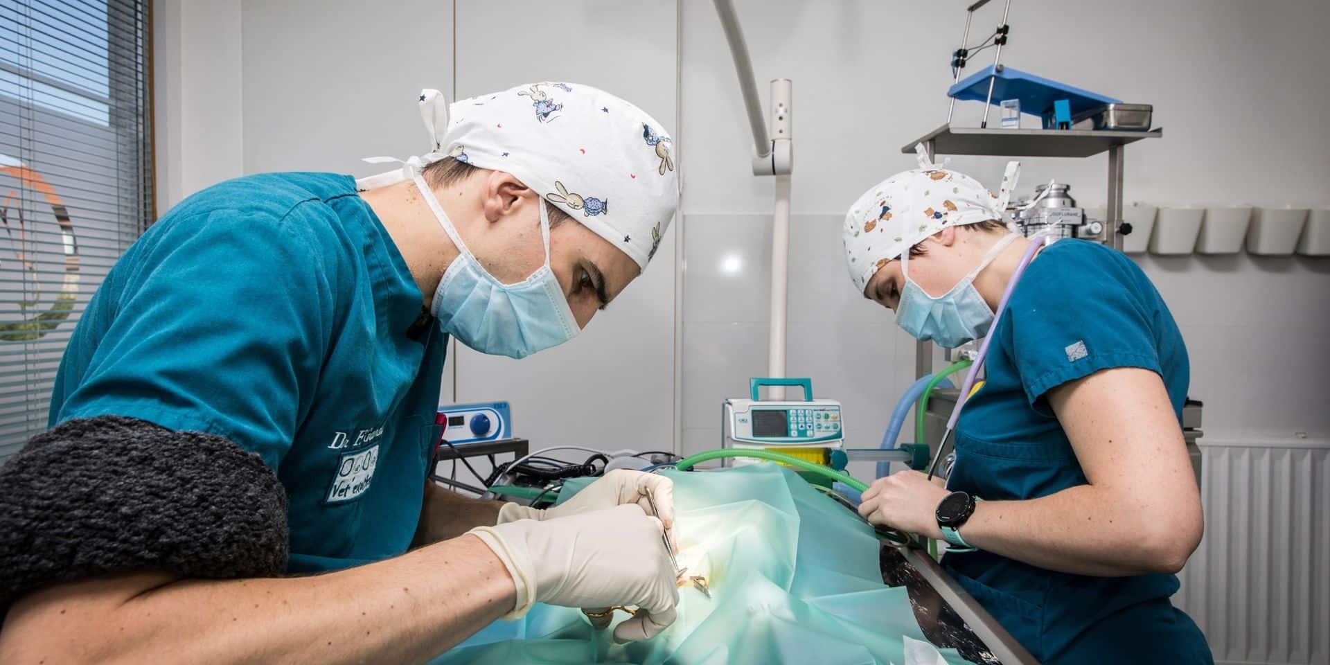 """Des universitaires plaident pour une enquête sur les risques des contacts avec les animaux: """"Le virus nous a douloureusement rappelé que nos interactions avec eux peuvent être dangereuses"""""""