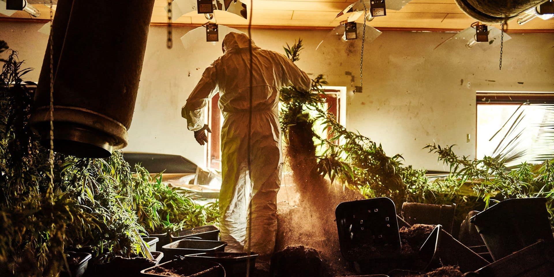 Il cultivait 1.400 plants de cannabis à Beauvechain