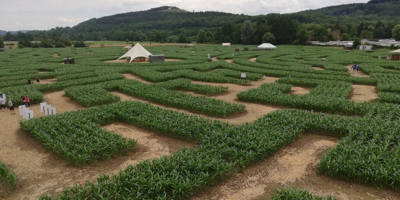 Le labyrinthe de Durbuy a ouvert ses allées de maïs ce samedi