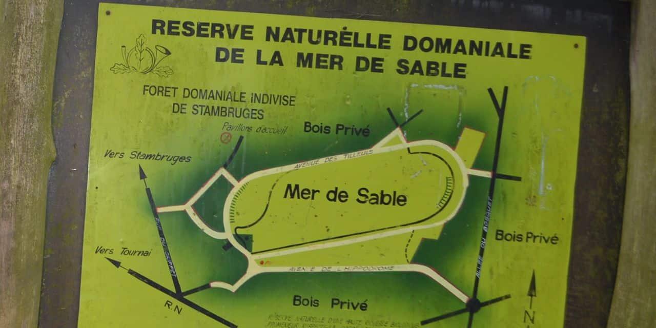 Stambruges : découvrez les plantes comestibles de la Mer de Sable