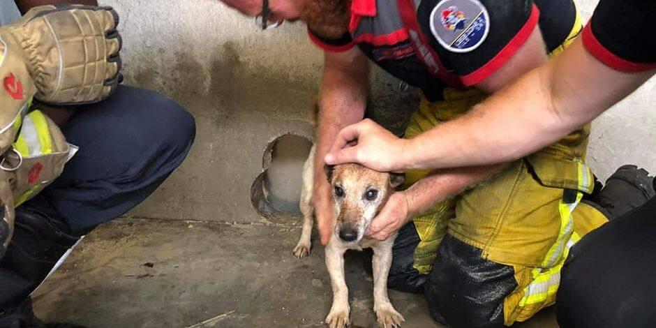 Hauts-Sarts: un chien sauvé par les pompiers