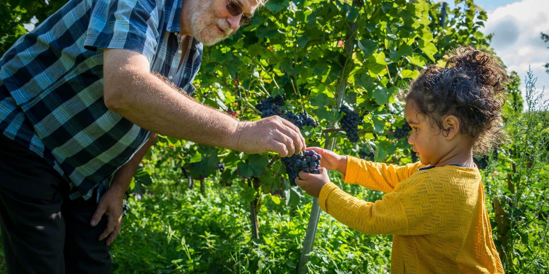 Vous aimez le vin et avez la main verte: gagnez des ceps de vigne et devenez vigneron