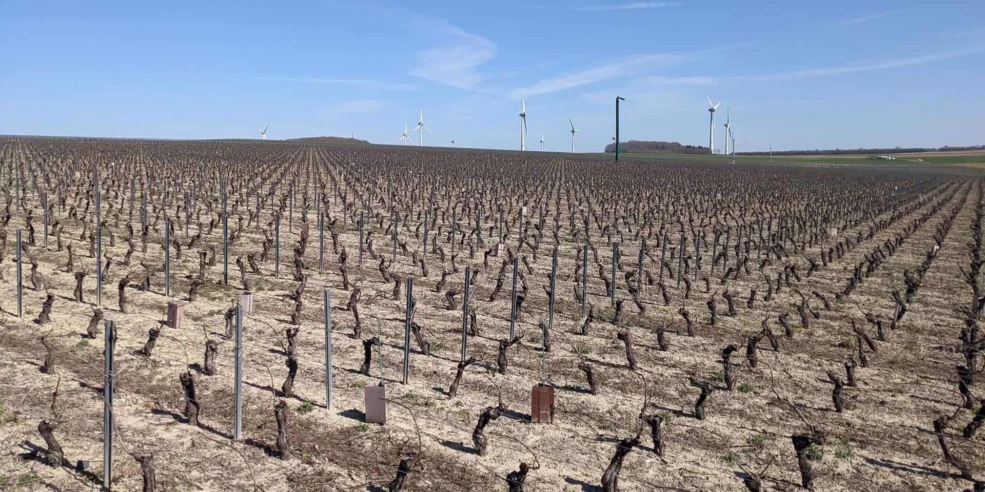 Mons-Centre: Le gel donne des sueurs froides aux vignobles