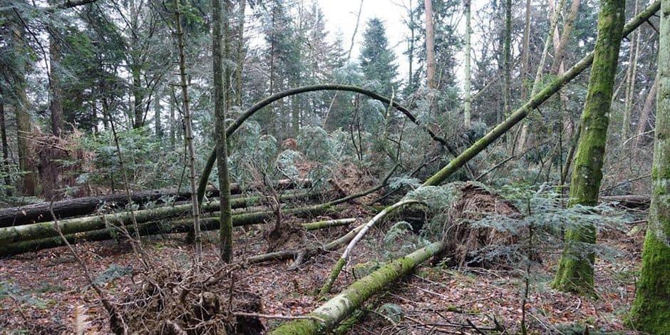 Tempête Ciara: le parc d'Enghien reste fermé !