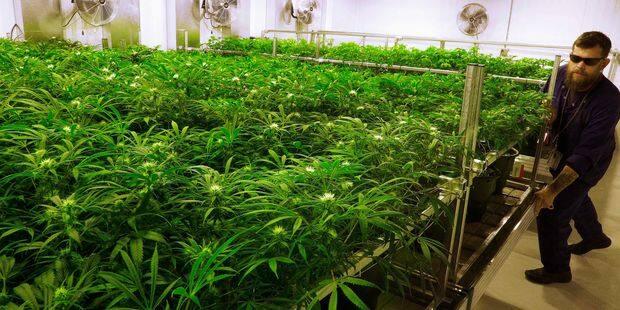 2.000 plants de cannabis à Verviers ! - La DH