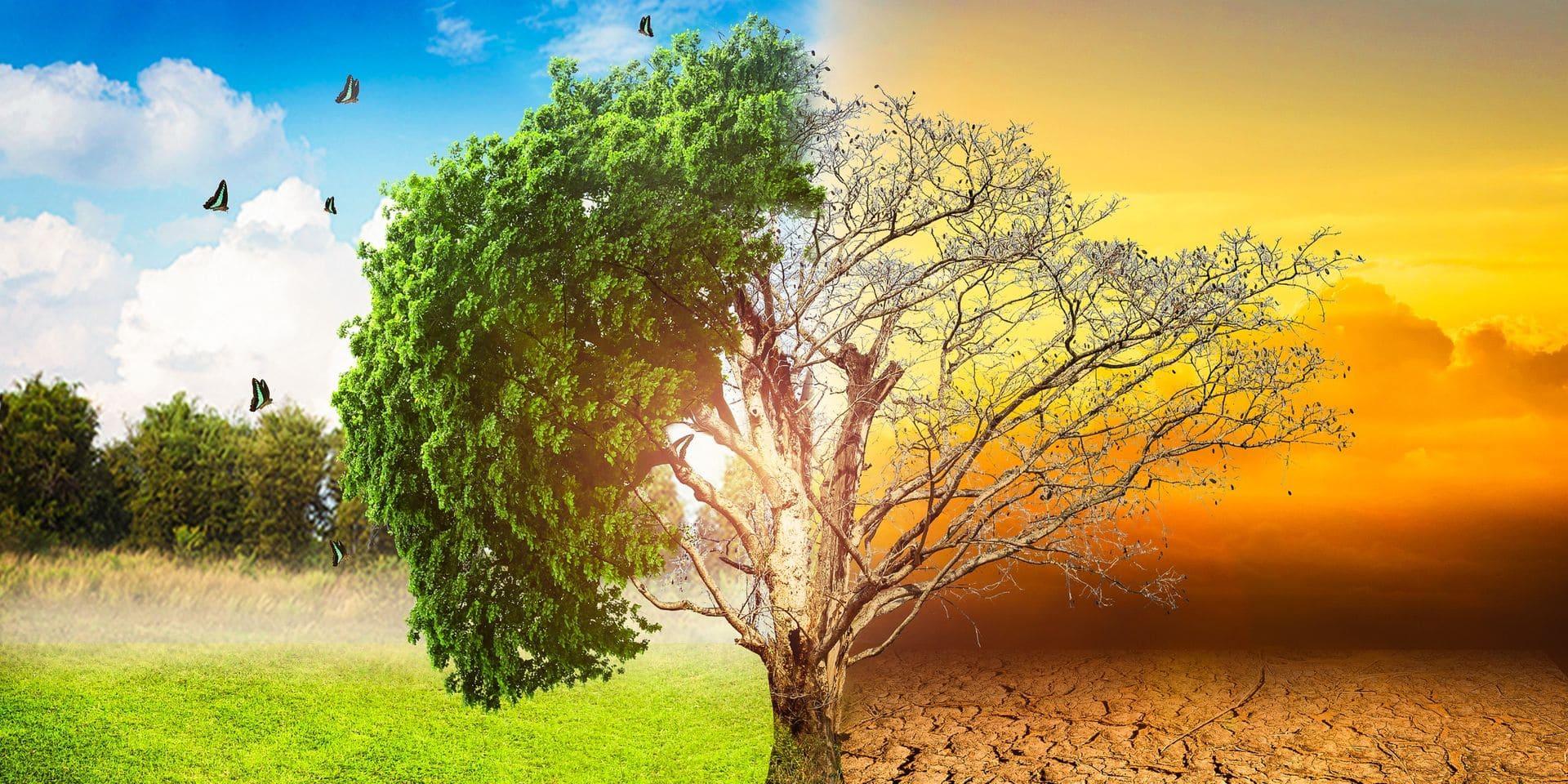 Réchauffement climatique : un demi-degré de plus, des conséquences en cascade
