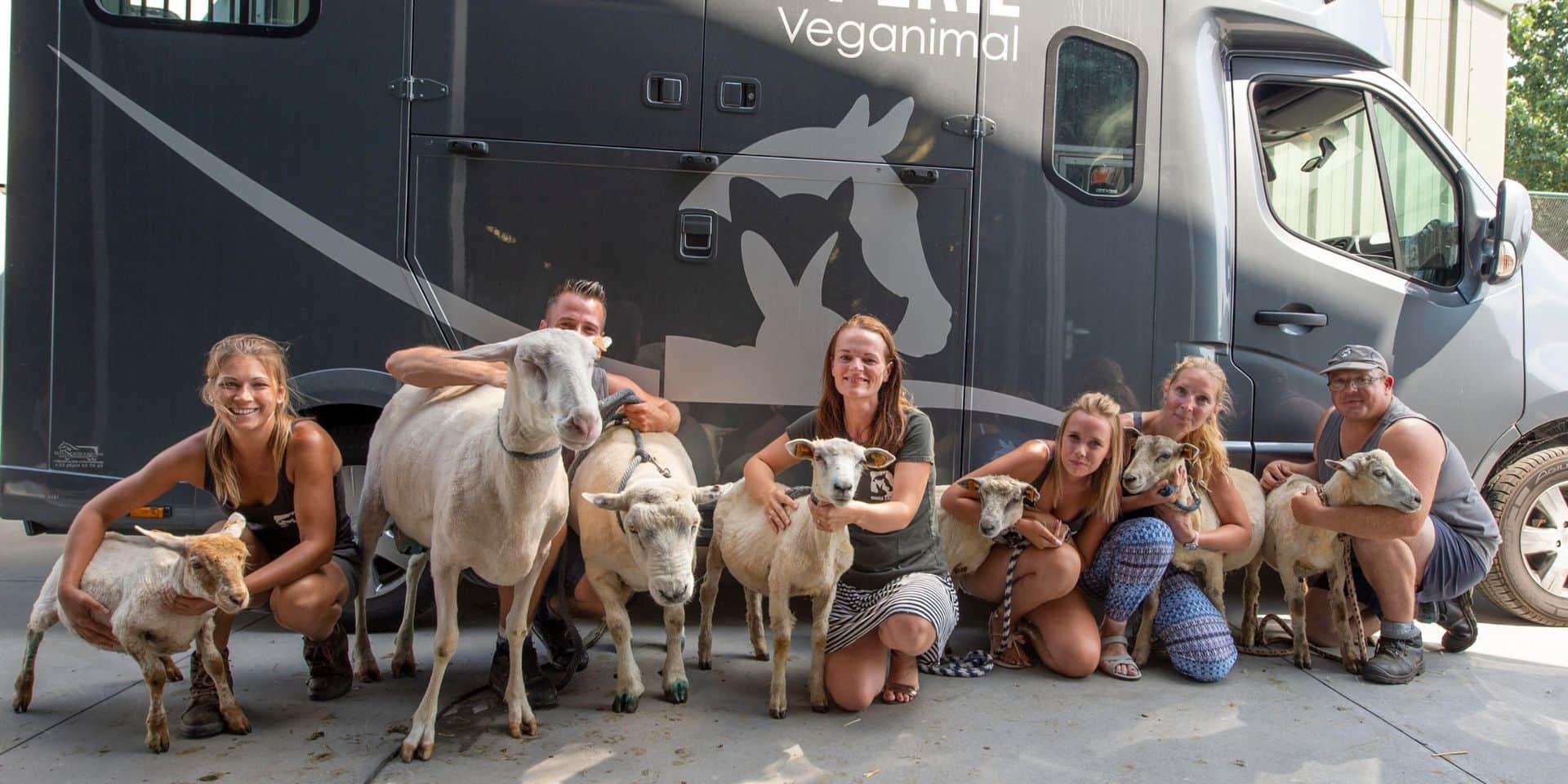 6000 euros d'amende et 24 000 euros d'indemnité pour maltraitance animale à Piéton