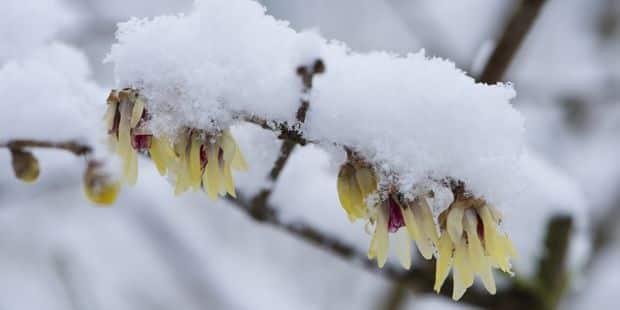 La neige pourrait faire son apparition ce week-end en Belgique