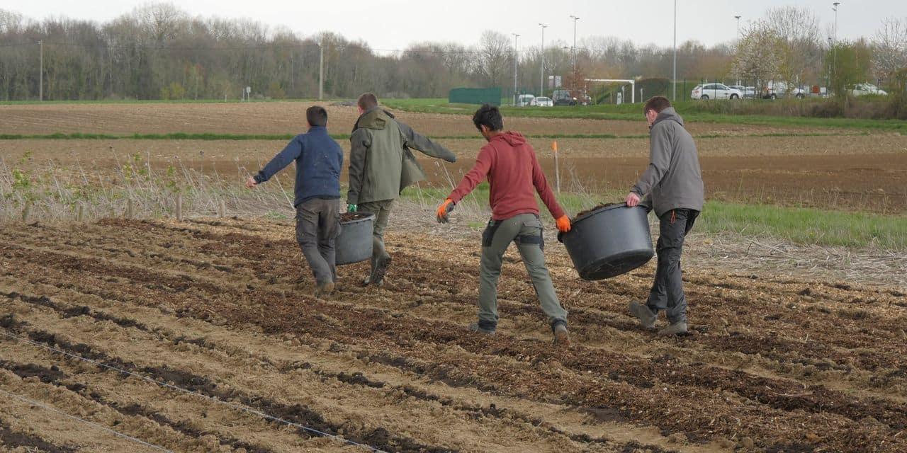 """Le projet """"bocage pour tous"""" du Parc Naturel des Hauts-Pays séduit de plus en plus"""
