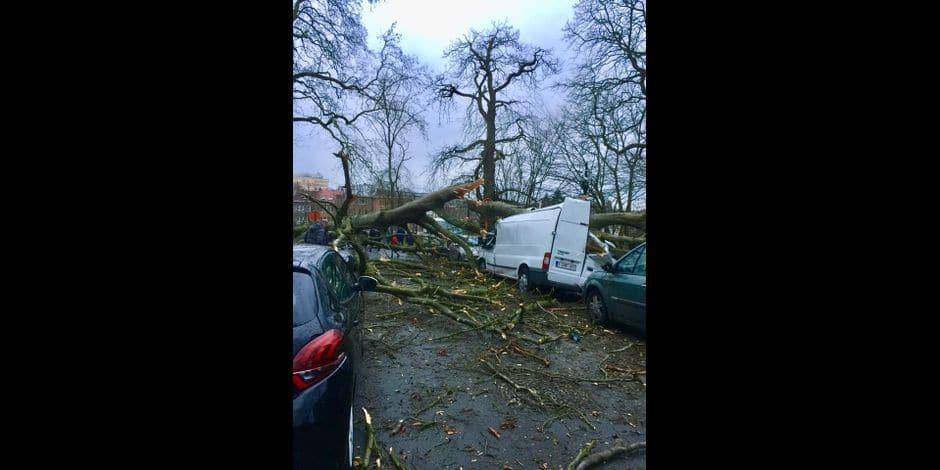 Watermael-Boitsfort : Deux arbres se sont effondrés sur plusieurs véhicules dans l'avenue Van Becelaere