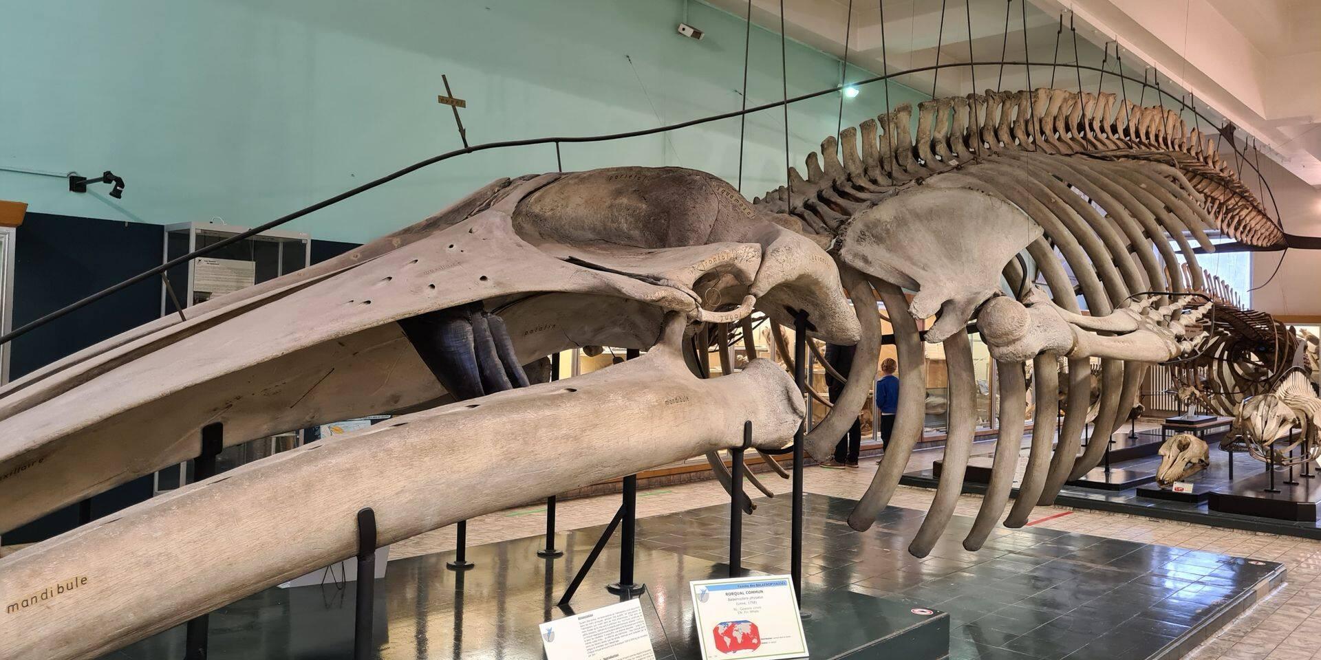 Vers un nouveau musée de zoologie à Liège