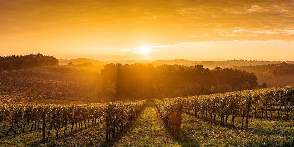 Voici nos coups de coeur pour huit vins bordelais qui seront parfaits en été - La DH