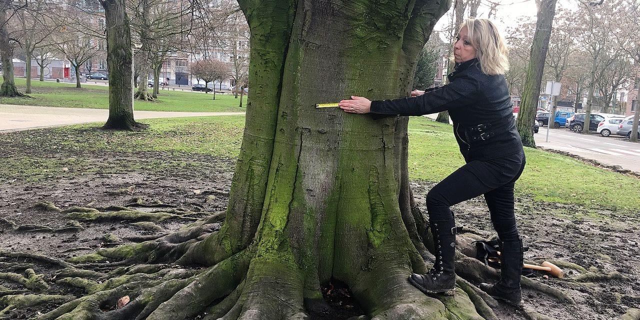 "Profession: ""médecin des arbres"""