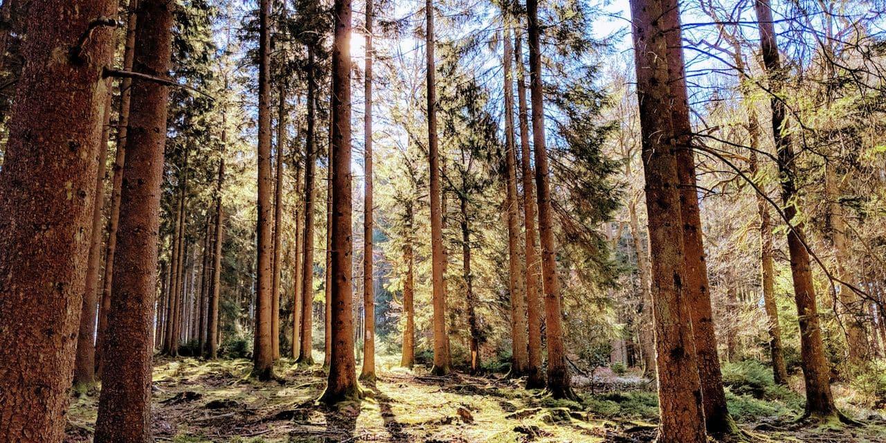 Helloways : Partez en randonnée nature à deux pas de chez vous