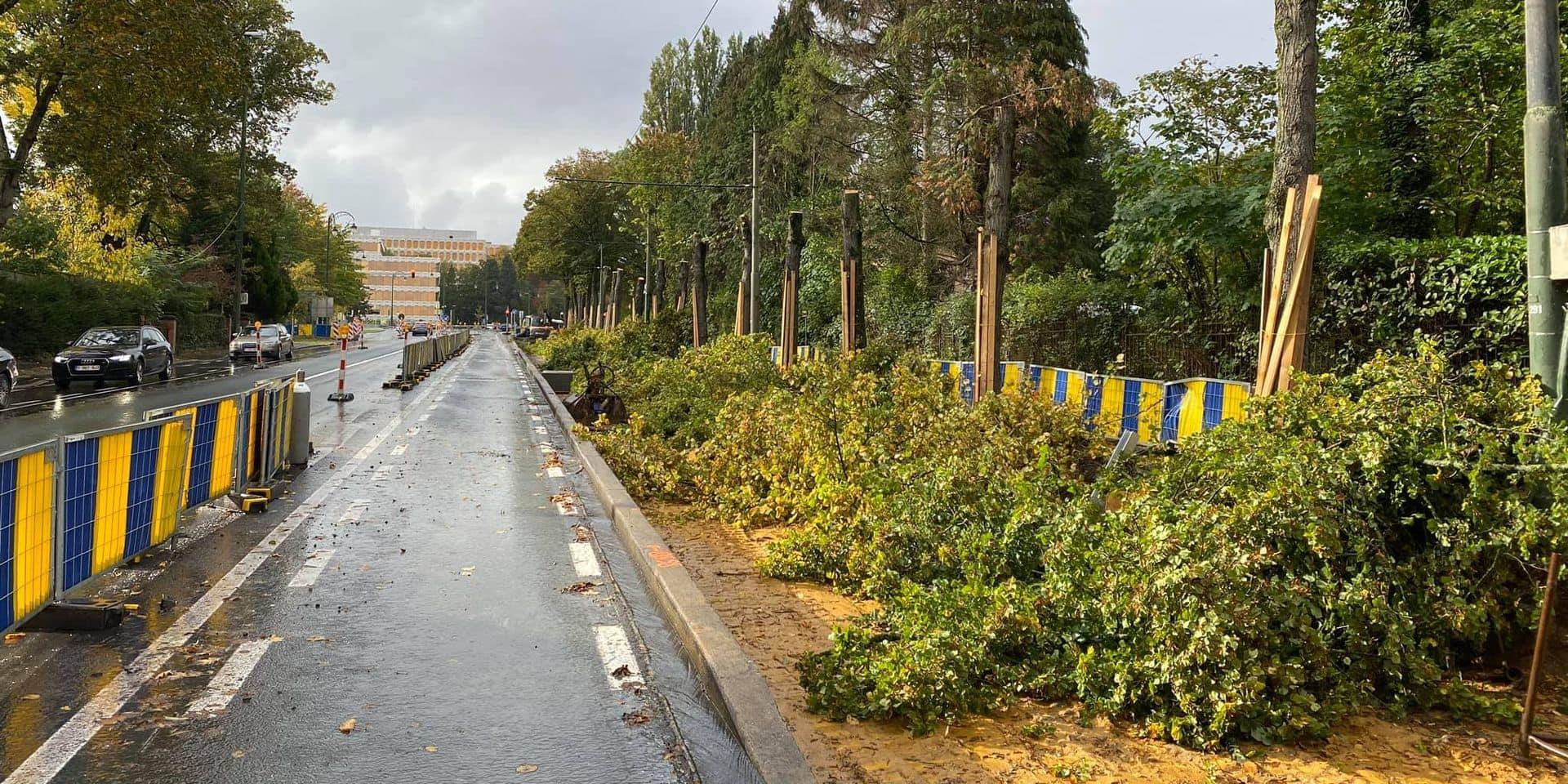 Le chantier Stib à Watermael-Boitsfort tourne au fiasco : 19 tilleuls en cours d'abattage
