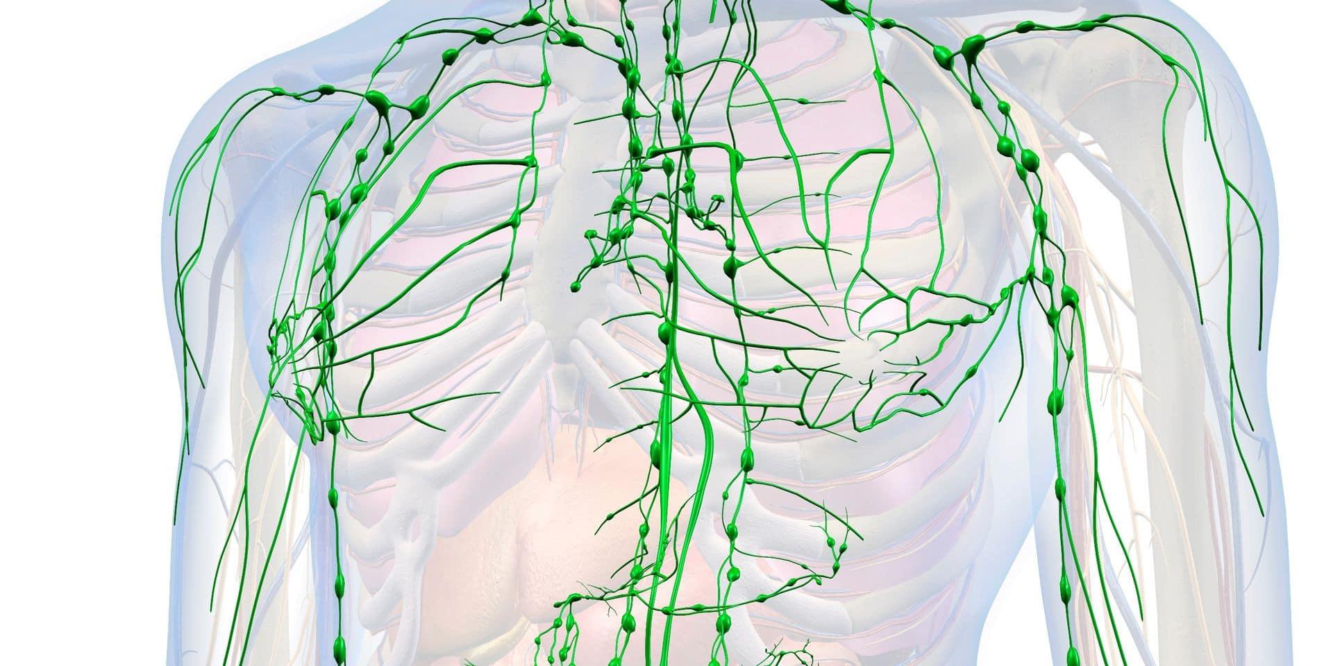 À quoi sert la lymphe, ce liquide présent dans tout le corps?