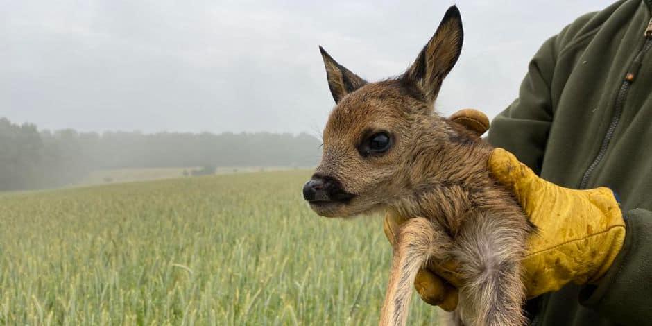 Mons-Borinage: l'association Sauvons Bambi se met au service des agriculteurs