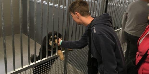 Nouveau départ pour Animal sans toi?t ! - La DH